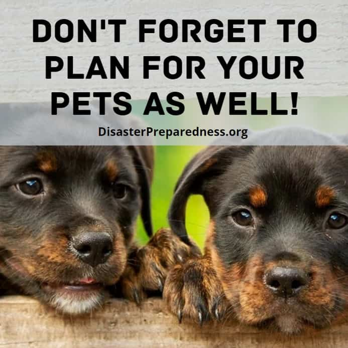 Don't forget to plan for your pets as well!
